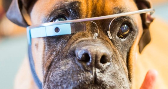googleglassdog